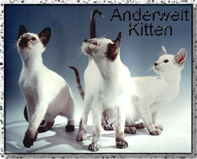 Anderwelt_Kittens_1